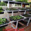 kệ sắt v lỗ trồng rau 3 tầng